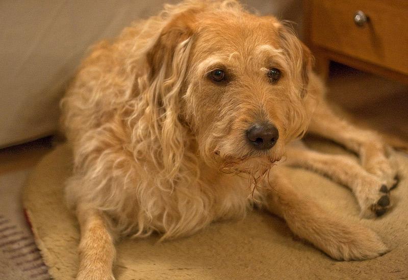 Bailey - My beautiful blonde model!