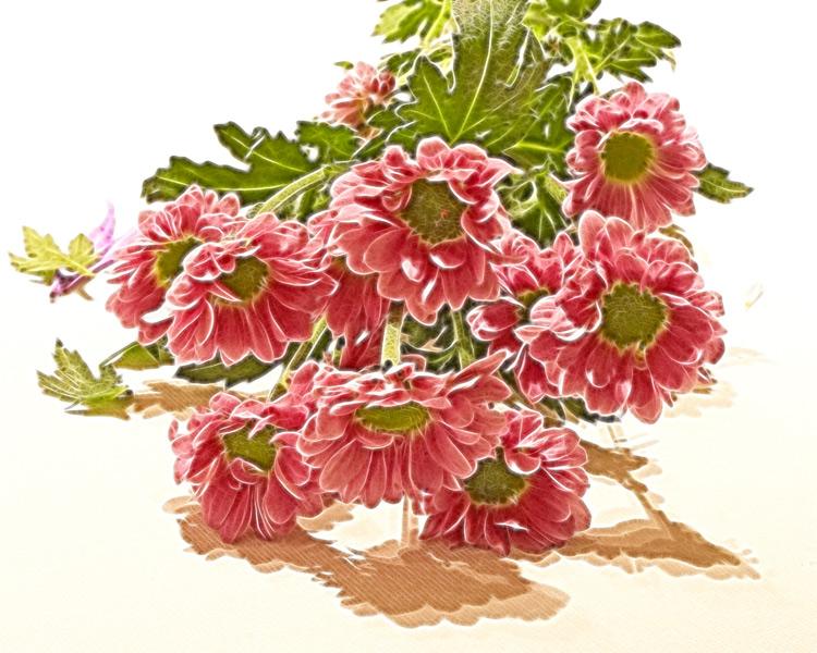 pink mini crysanths