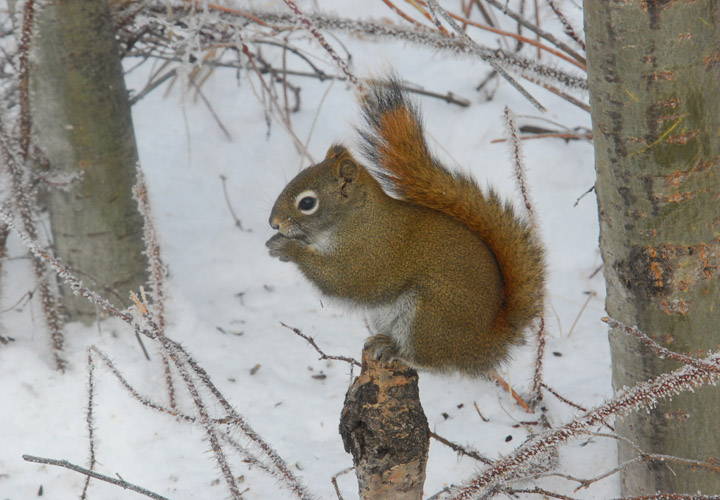 Squirrel Perch!