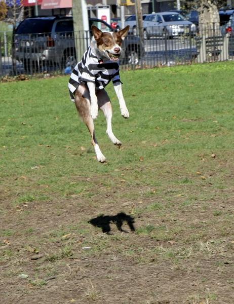 Dyker Dog parade_025.JPG