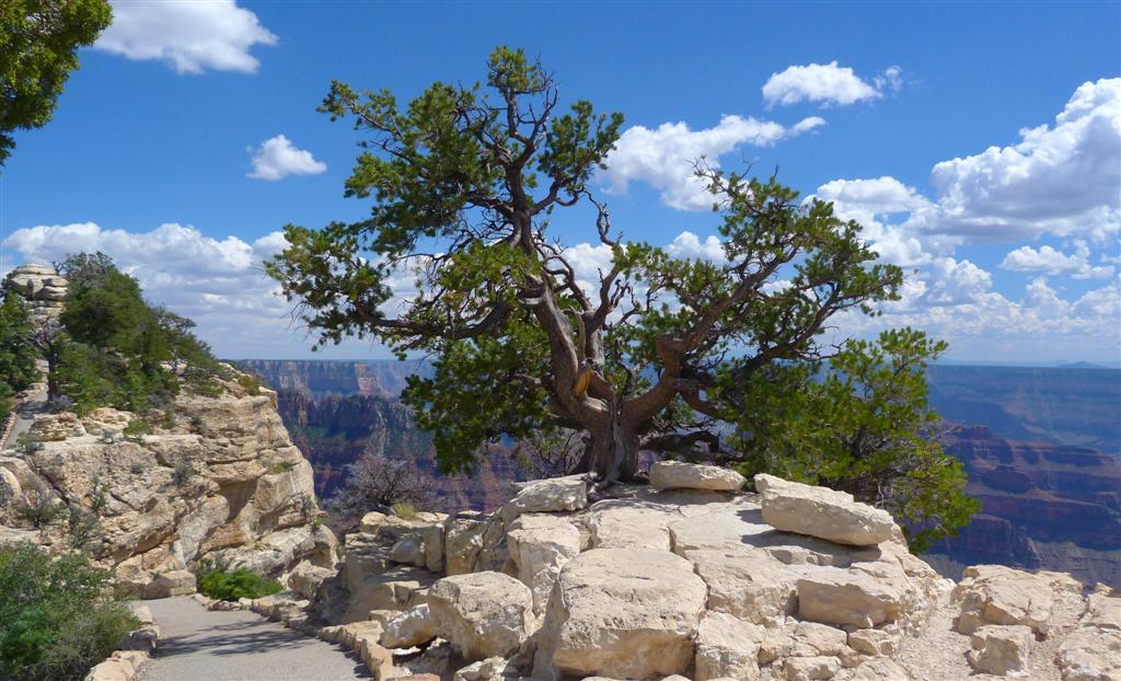 501 Grand Canyon Bright Angel Point 9.jpg