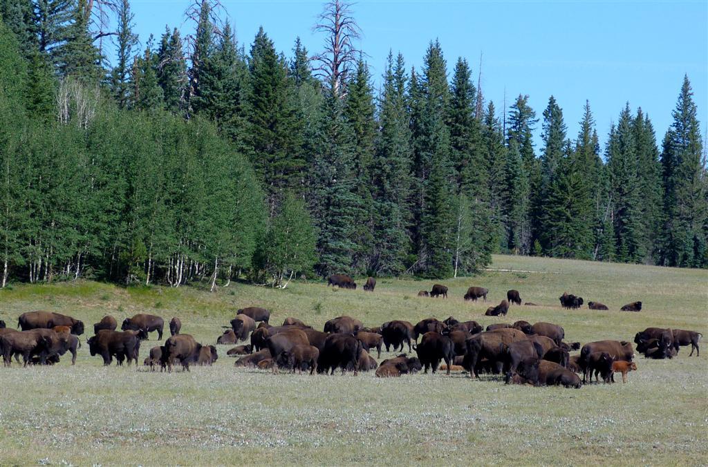 601 GCNR Rt 67 Buffalo 1.jpg