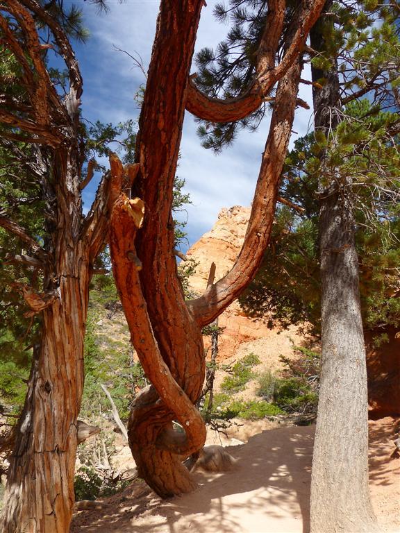 153 Bryce Canyon Navajo Queens Hike 28.jpg