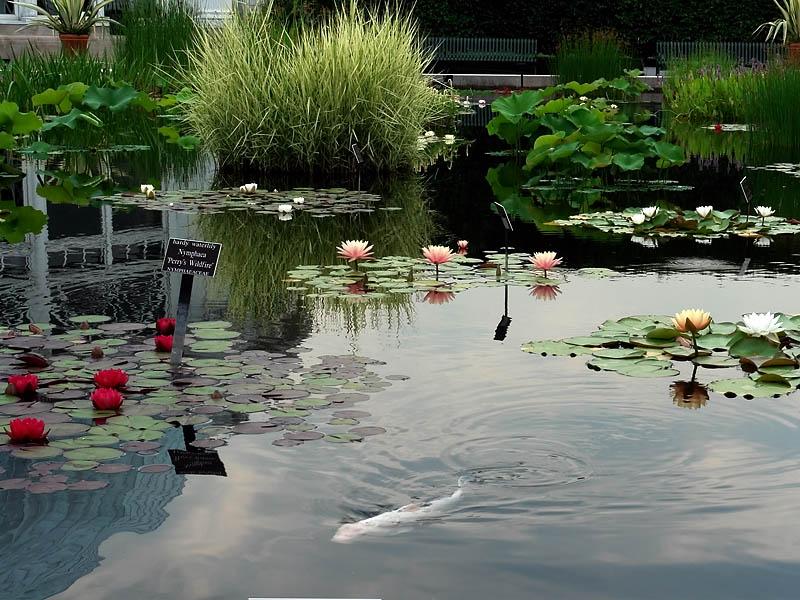2008-06-21<BR>NY Botanical Gardens<BR>4 Minute<BR>VIDEO