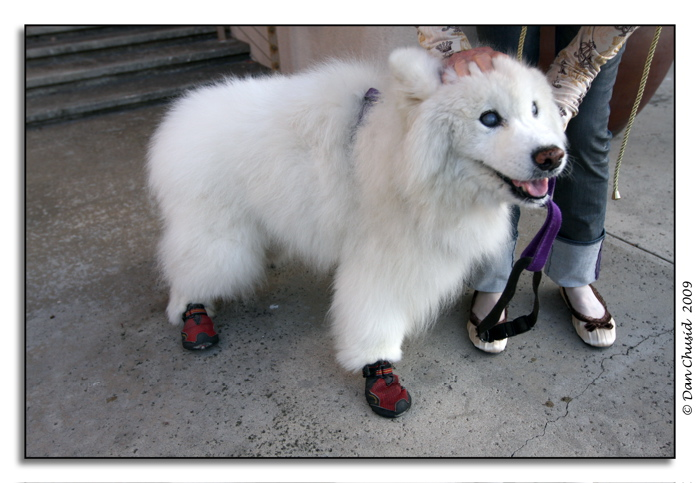 Doggy Booties