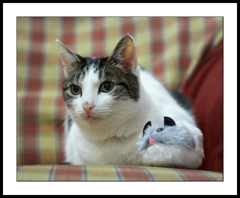 Minnie and pal