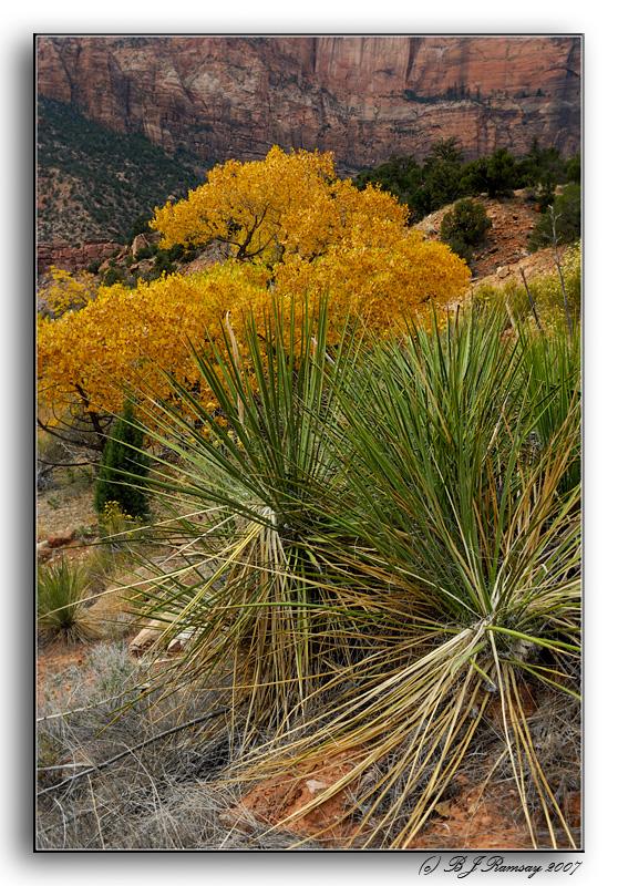 Cactus and Cottonwoods