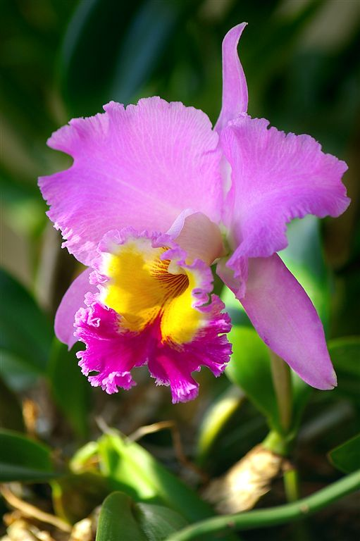 Orchid in Arenal Volcano National Park