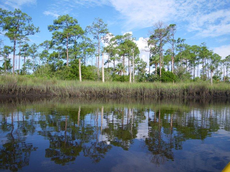 Creek Scenery in July