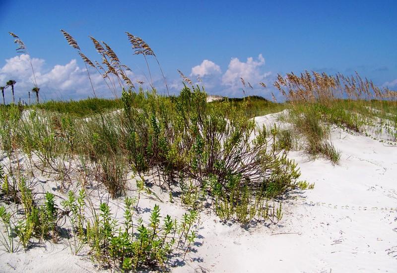 Talbot Island Beach Front Dunes