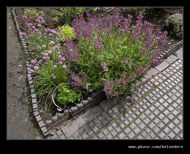 Pitts Cottage Garden Flowers, Black Country Museum