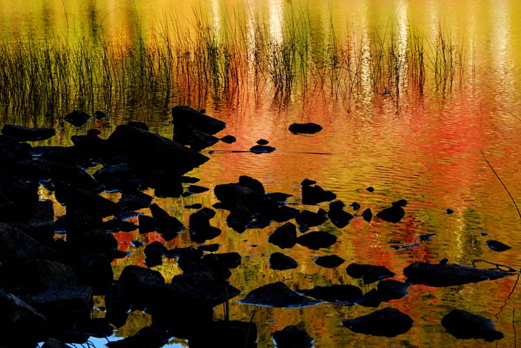 Three Rs... Reeds, Rocks and Reflections