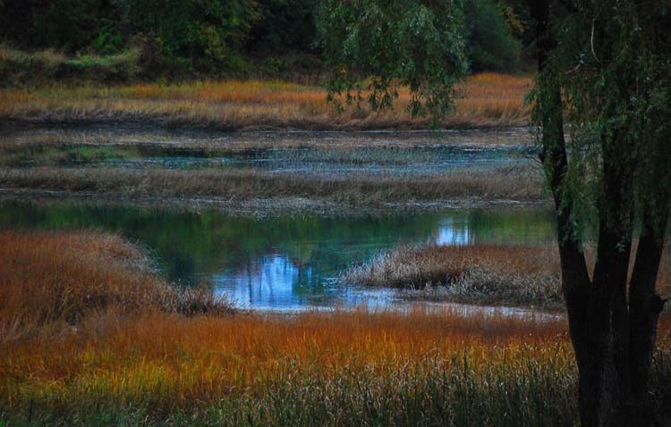 Pretty Little Maine Marsh