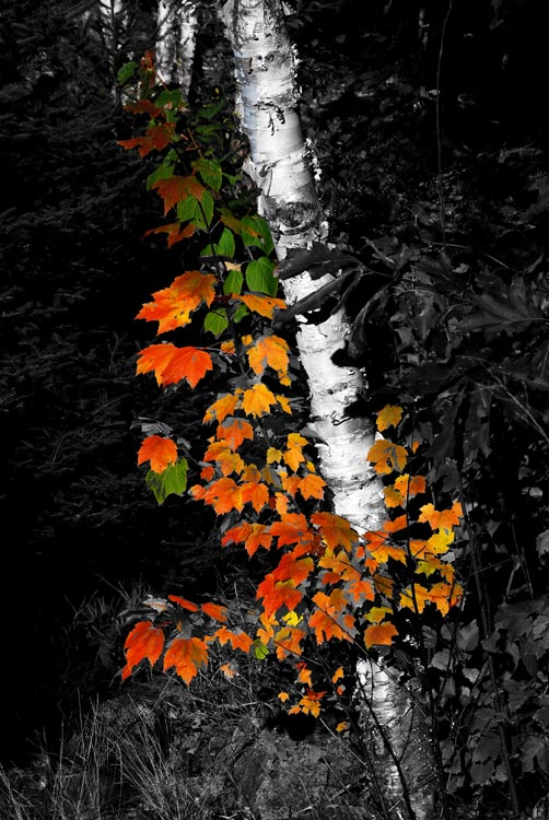 Bits of Autumn, Here and There