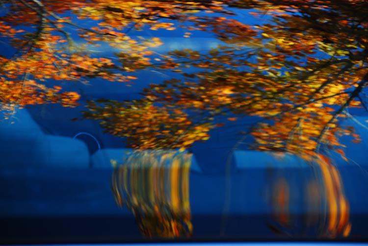 Still a Beauty Reflected in a Car Window
