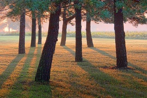Sunrise Shadows 20444-5