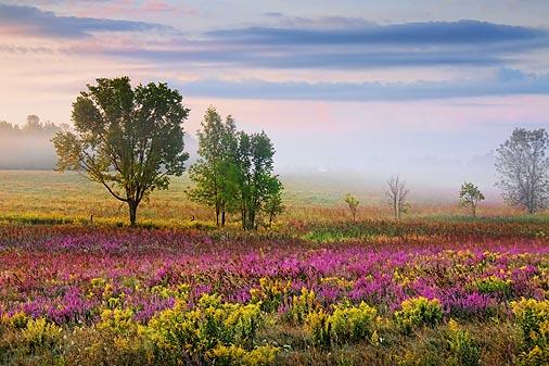 Landscape At Sunrise 20450-1