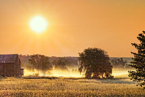 Tree & MIst 01144