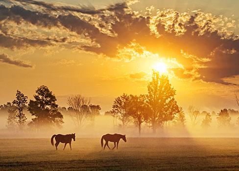 Two Horses In Misty Sunrise 20120917