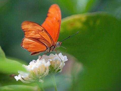Orange Butterfly 28219