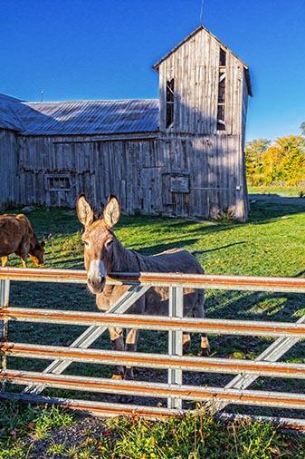 Friendly Donkey 29277