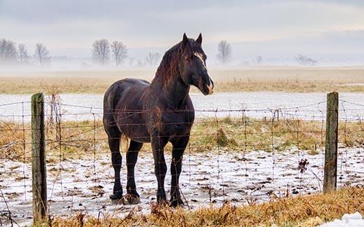 A Dark Horse 31904