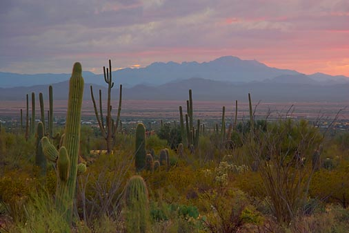 Desert Sunset 74329