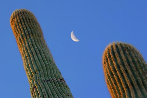 Saguaro Moon 75553