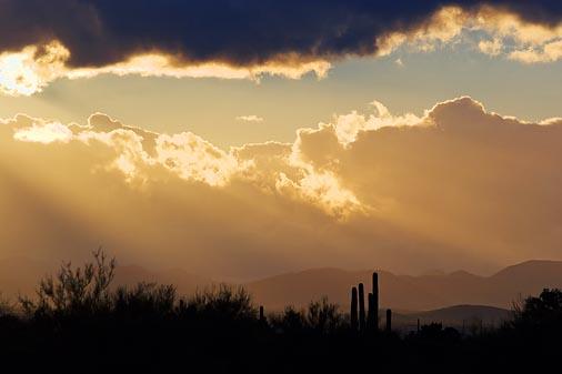 Desert Sunrays 75507