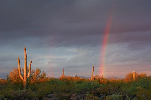 Sunrise Rainbow 76505