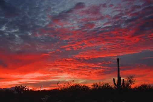 Desert Sunset 77395