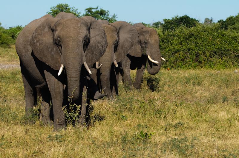 Tusker Family