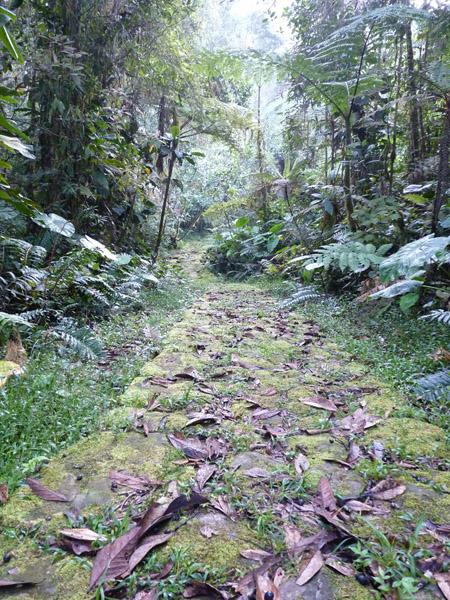 Lengerke Trail 2 Cerulean Warbler Reserve / RNA Reinita Cielo Azul
