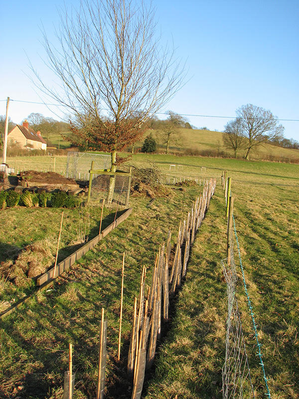 Vegetable garden extension hedge, February 2010
