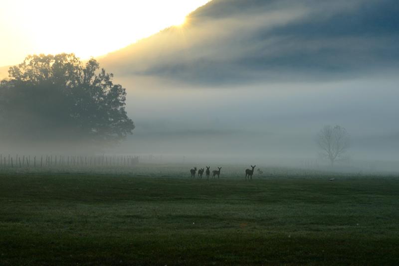Sunrise Deer