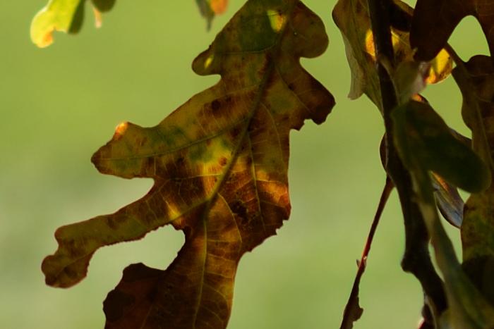 D7K_5687-crop.jpg