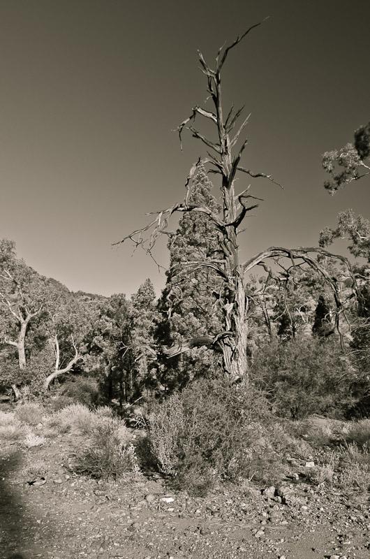 Flinders Ranges vista ii