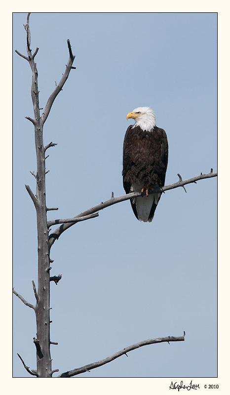 20100521_Yellowstone_0029.jpg
