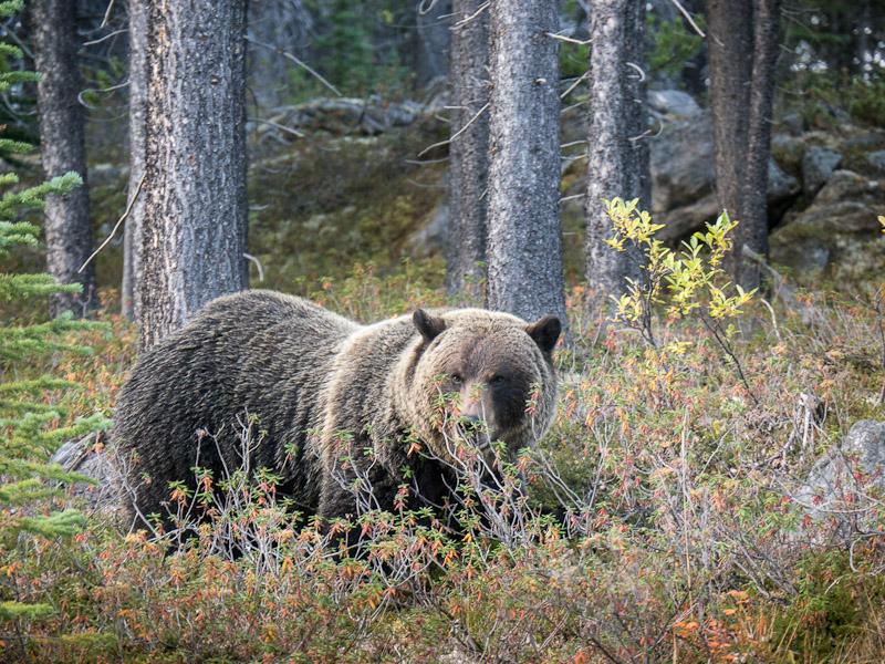 20120920_Alberta BC_1279.jpg