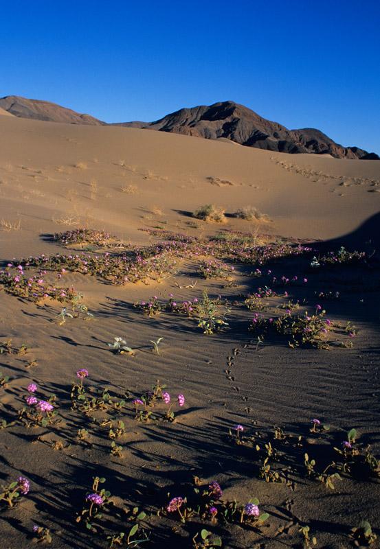 31 Ibex Dunes