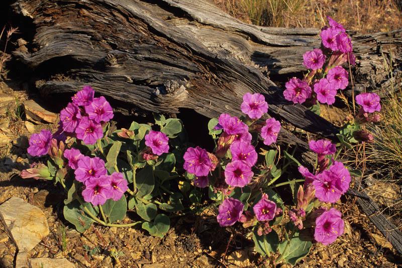 36 Mojave Preserve