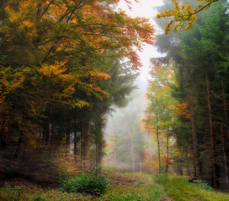 How silent is a forest in the fog....