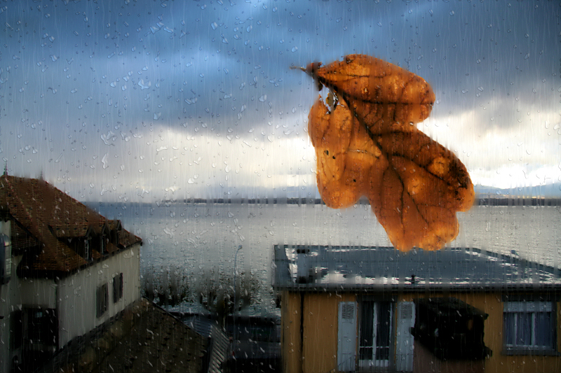 The lonely leaf, which wanted to get in...