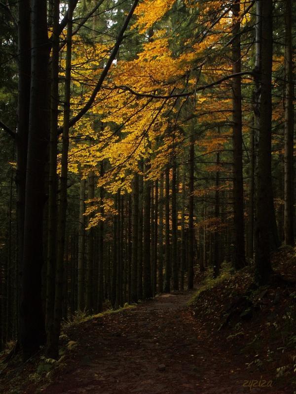 recurrent path