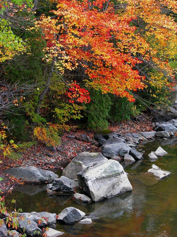 automne canadien