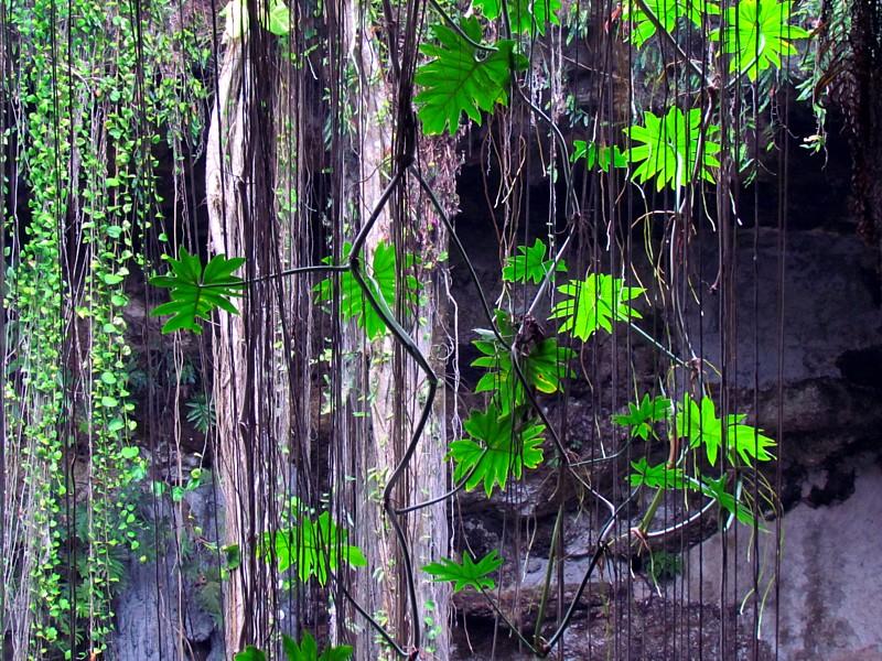la jungle du cenote
