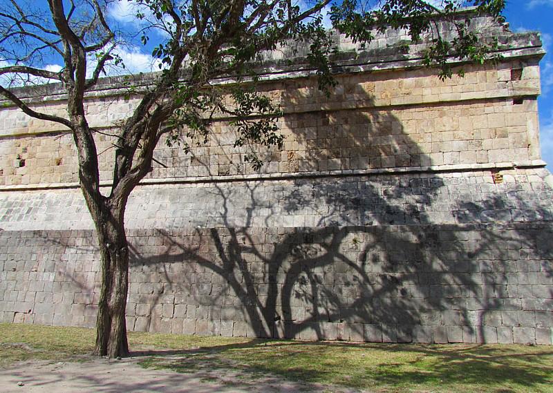 Larbre contre le mur
