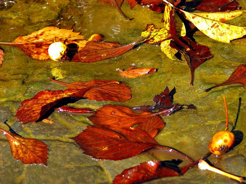 feuilles mortes dans un filet deau