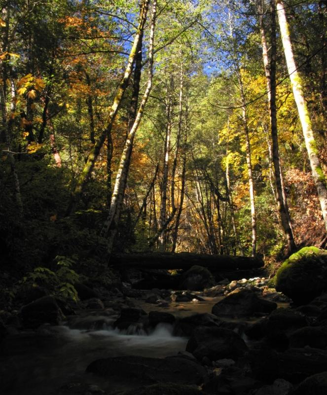 Little Grider creek in the fall