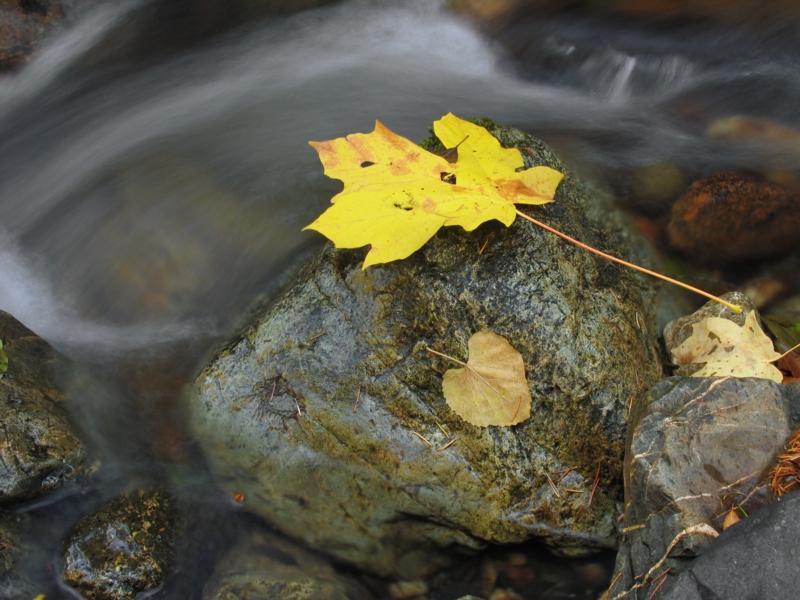 Leaf, rock, time